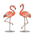 pink flamingo bird pop art vector image vector image