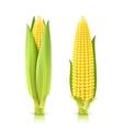 Sweet Corn Set vector image vector image