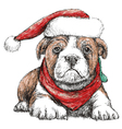 Bulldog with red hat vector image vector image