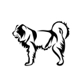 Caucasian Shepherd Dog vector image