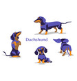 dachshund black vector image