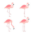 cartoon pink flamingo set cute flamingos vector image