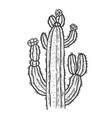 cactus plant sketch vector image