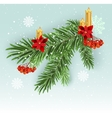 Christmas tree branch decoration Green lush vector image vector image