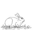 rabbit eating grass hand drawn sketch vector image