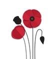 red poppy vector image