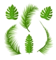 set summer plant decoration green palm vector image vector image