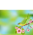 spring bird background vector image