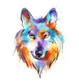 colorful watercolor wolfs head vector image
