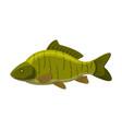 largemouth freshwater fish fresh aquatic fish vector image vector image