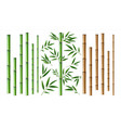 realistic bamboo stick brown and green tree vector image vector image