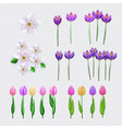spring flowers set on transparent background wuth vector image