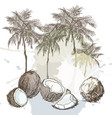 summer tropical palm and coconut background vector image