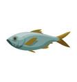 bream freshwater fish fresh aquatic fish species vector image vector image