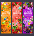 color diet orange red and purple products vector image vector image