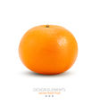 Mandarin isolated on white background vector image vector image