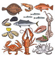 sea food products for gourmet vector image