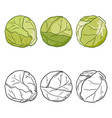 set cartoon and sketch brussels sprouts vector image vector image