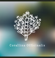 corallina officinalis drawing vector image