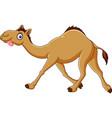cartoon funny camel running vector image vector image