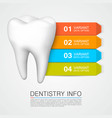 tooth information with numbering dentistry info vector image vector image