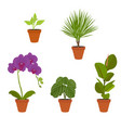 various potted houseplants garden potted plants vector image vector image