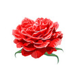 image red rose isolated on white background vector image