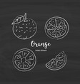 orange fruit drawing orange slices sketch of vector image vector image