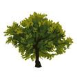 tree oak clip art vector image vector image