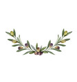 watercolor wreath olive branches and vector image