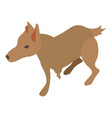 wounded dog icon isometric 3d style vector image vector image