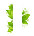 Natural Background With Leaves And Drops vector image vector image
