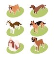 Collection of isometric dogs vector image