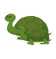 cute family turtles wild characters vector image