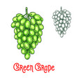 green grape sketch isolated fruit berry vector image vector image