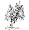 image of pear tree with branches and fruits vector image