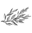 two branches with leaves vector image vector image
