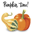 two different orange pumpkin isolated on white vector image vector image