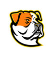 american bulldog mascot vector image vector image