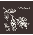 Coffee branch with berry Hand drawn vector image vector image