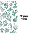 hand drawn medical herbs vector image vector image
