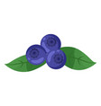 isolated at white blueberries icon with green vector image