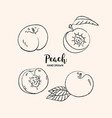 peach fruit drawing peach fruit cut in half with vector image vector image