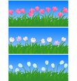 spring flowers and grass vector image vector image