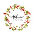 Autumn Rowan Berry Background Floral Banner Design