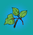 birch leaf nature parks and forests vector image