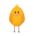 cute chick bird vector image