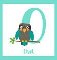 letter o vocabulary turquoise owl bird