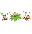little funny monkeys on lians set vector image