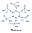 Phytic acid phosphorus vector image vector image